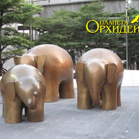 Три счастливых слона
