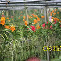 Орхидеи среди каналов