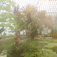 Пальмы в пруду с листьями Виктории Регины