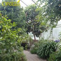 Дорожка оранжереи