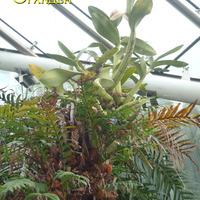 Орхидеи и папоротники