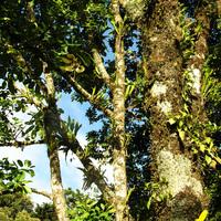Бильбергии, Тилландсии, орхидеи