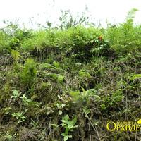 Придорожная растительность в горах Монтеверде