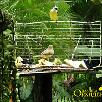 Птицы кормятся дыней