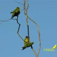 Беседы попугаев