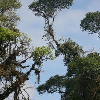 Орхидеи и бромелиевые в естественных местах обитания