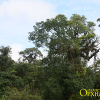 Сельва центральной части Коста-Рики