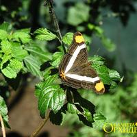 Бабочка в питомнике