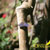В питомнике бабочек