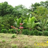 Придорожная растительность