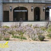 Флористический дизайн на Почтовой площади