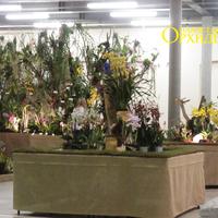 Орхидейный лес