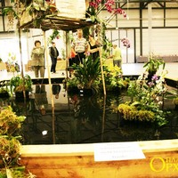 Маленький бассейн с плавающими в нем островками Пафиопедилумов и других орхидей