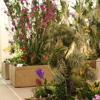 Орхидеи и Тилландсии
