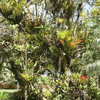 Вдоль дорожек парка можно увидеть роскошные орхидеи, бромелии