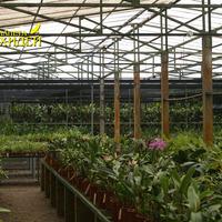 Начало огромной коллекции орхидей