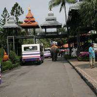 Передвигаться по парку можно пешком, в автобусе и на слоне
