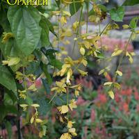 Можно встретить интересные цветущие растения