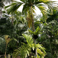 Тропинки среди пальм