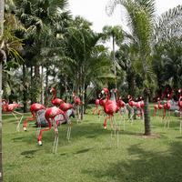 Дорожки и тропинки приводят к поляне, на которой расположились фламинго.