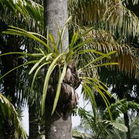Цимбидиумы на пальме