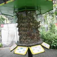 Питомник. Молодые появляющиеся бабочки