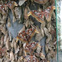Бабочки-красавицы