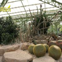 Сад кактусов. Коллекция кактусов и суккулентов. Общий вид