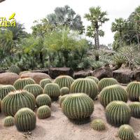 Художественная композиция из кактусов и пальм