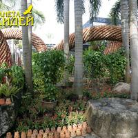 Недалеко от входа оригинальная композиция, построенная из горшков для растений.