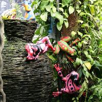 Лягушки на корзине