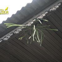 Орхидеи, приткнувшиеся на крыше