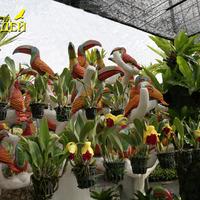 Сад орхидей. Прекрасная композиция, украшенная гибридными Каттлеями