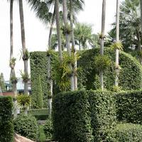Одна из дорожек приводит к пальмам