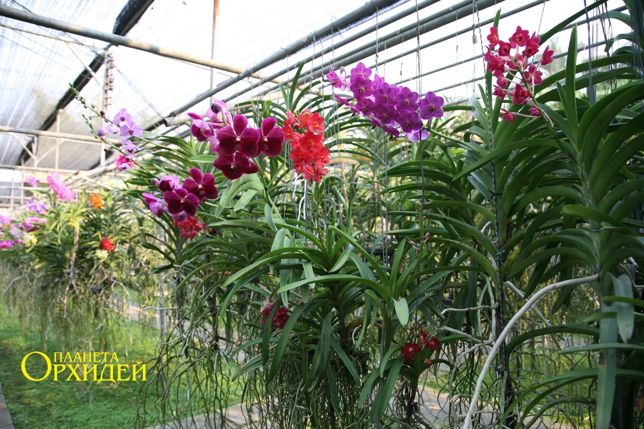 Орхидея уход в домашних условиях инструкция с фото и видео