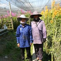 Труженицы орхидейных полей. Шляпы и повязки предохраняют от перегрева и испарений. Одежда максимально закрывает всё тело