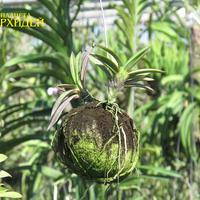 Вот так происходит рост на кокосе