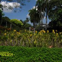Оформление парков клумбами с орхидеями. Очень органично вписываются в ландшафт, создавая яркие красочные пятна