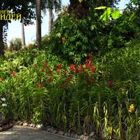 Красная гибридная Ренантера на клумбе и белые Дендробиумы в кокосах