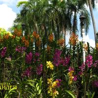 Орхидеи в три яруса, создают жёлто-сиреневую цветовую гамму