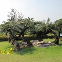 Пальмовая композиция