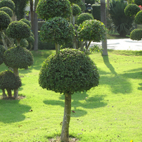 Деревья - зонтики