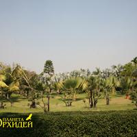 Разнообразные пальмы