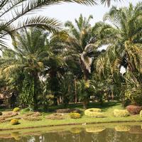 Красивые пальмы на берегу пруда. Кусты подстрижены змейками