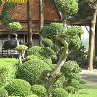 Композиция из шаров - кусты разного размера и дерево - всё в одном стиле