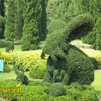 Популярные кусты - скульптуры располагаются группами или отдельно, но все, как правило, создают общую картину