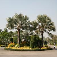 Парк Тавихол (Taweechol)Ботанический сад знаменит своими роскошными пальмами.