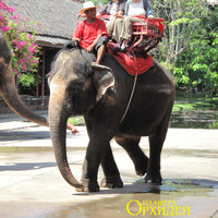 Прогуливаться по парку можно и на слонах
