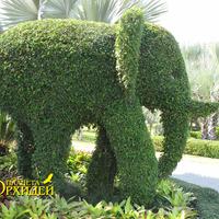 Слонёнок вид сбоку - очень изящный хобот и клыки. Замечательно передана походка слона.