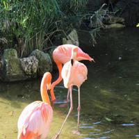 Водоём с розовыми фламинго